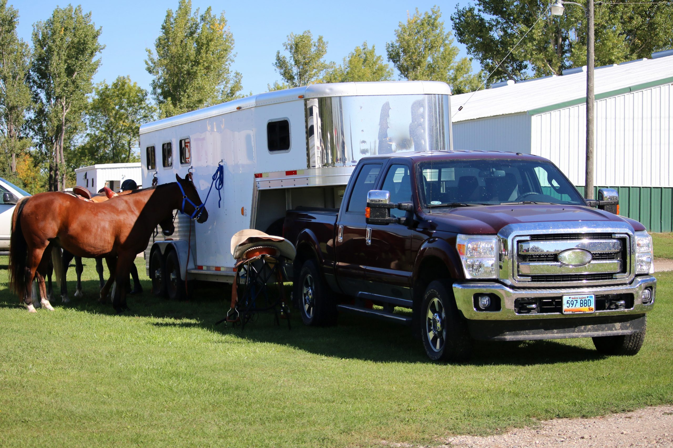 Horse Tied to Horse Trailer